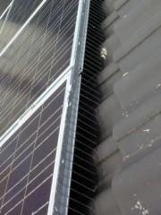 Hroty proti holubům solar